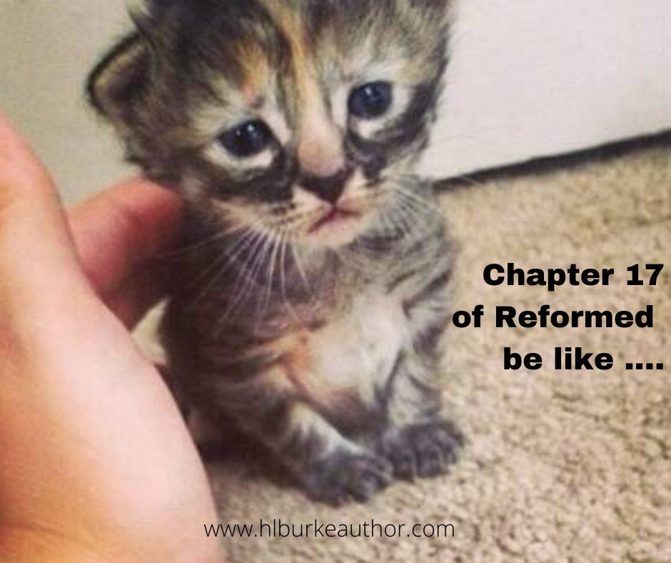 chapter 17 kitten